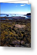 Inter-tidal Zone Deer Isle Greeting Card