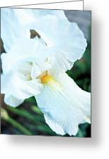 Intimate Iris Greeting Card