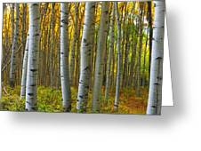 Into The Aspens Greeting Card