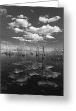 Into The Everglades Greeting Card