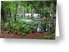 Into The Green Swamp Greeting Card