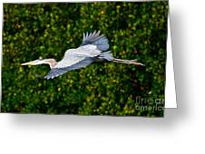 Into The Mangroves Greeting Card