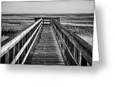 Into The Marsh  Greeting Card