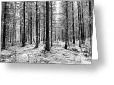 Into The Monochrome Woods Greeting Card