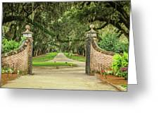 Into The Oaks Greeting Card