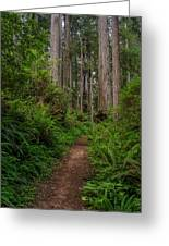 Into The Redwoods Greeting Card