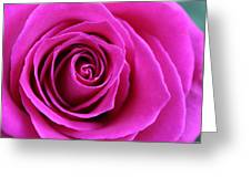 Into The Rose Greeting Card