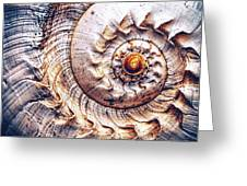 Into The Spiral Greeting Card