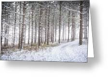 Into The Woods 3 - Winter At Retzer Nature Center  Greeting Card