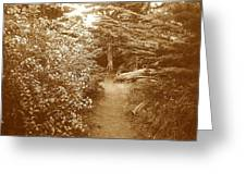 Into The Woods Sepia Greeting Card