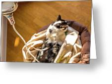 Intravenous Drip Cat Greeting Card