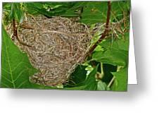 Intricate Nest Greeting Card