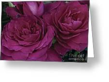 Intrigue Rose Greeting Card
