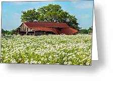 Poppy Invasion In Hillcountry-texas Greeting Card