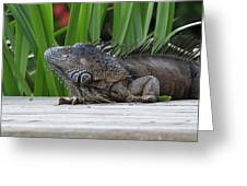 Iquana Greeting Card