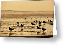 Iquique Chile Seagulls  Greeting Card