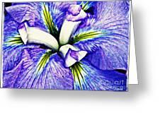 Iris 12 Greeting Card