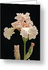 Iris 2 Greeting Card