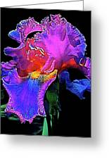 Iris 3 Greeting Card
