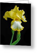 Iris 4 Greeting Card