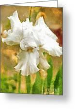 Iris 42 Greeting Card