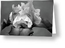 Iris 6622 H_4 Greeting Card
