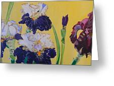 Iris Afternoon Delight Greeting Card