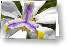 Iris An Explosion Of Friendly Colors Greeting Card