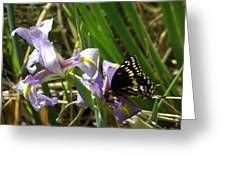Iris And Company Greeting Card