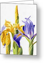 Iris And Flag Greeting Card