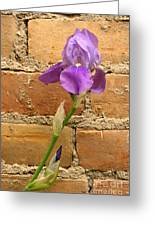 Iris And The Wall Greeting Card