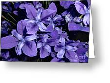Iris At Night Greeting Card