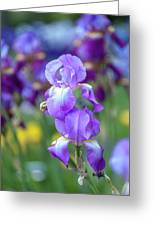 Ballet Girl. The Beauty Of Irises Greeting Card