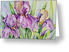 Iris Beauties Greeting Card
