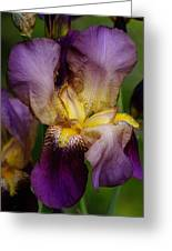 Iris Beauty Greeting Card