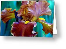 Iris Beauty Photograph Greeting Card