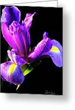 Iris Bloom One Greeting Card
