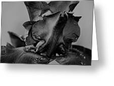 Iris Bw 3210 Greeting Card