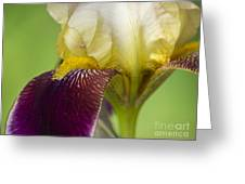 iris Closeup 2 Greeting Card