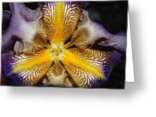 Iris Details Greeting Card