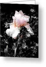 Iris Emergance Greeting Card