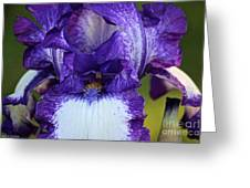 Iris Entrance Greeting Card