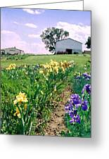 Iris Farm Greeting Card by Steve Karol