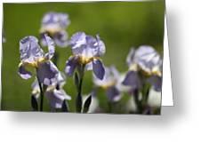Iris Feild Greeting Card