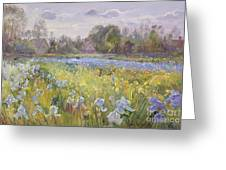 Iris Field In The Evening Light Greeting Card