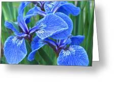Iris Floral  Greeting Card