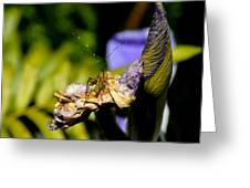 Iris Flower And Visitor Greeting Card