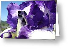 Iris Flower Art Print Purple Irises Botanical Floral Artwork Greeting Card