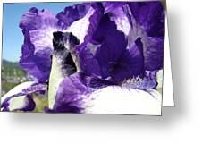Iris Flower Art Print Purple Irises Botanical Floral Artwork Greeting Card