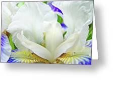 Iris Flower Art Print White Blue Purple Irises Baslee Troutman Greeting Card